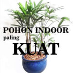 Palem jari waregu SI POHON INDOOR PALING the best